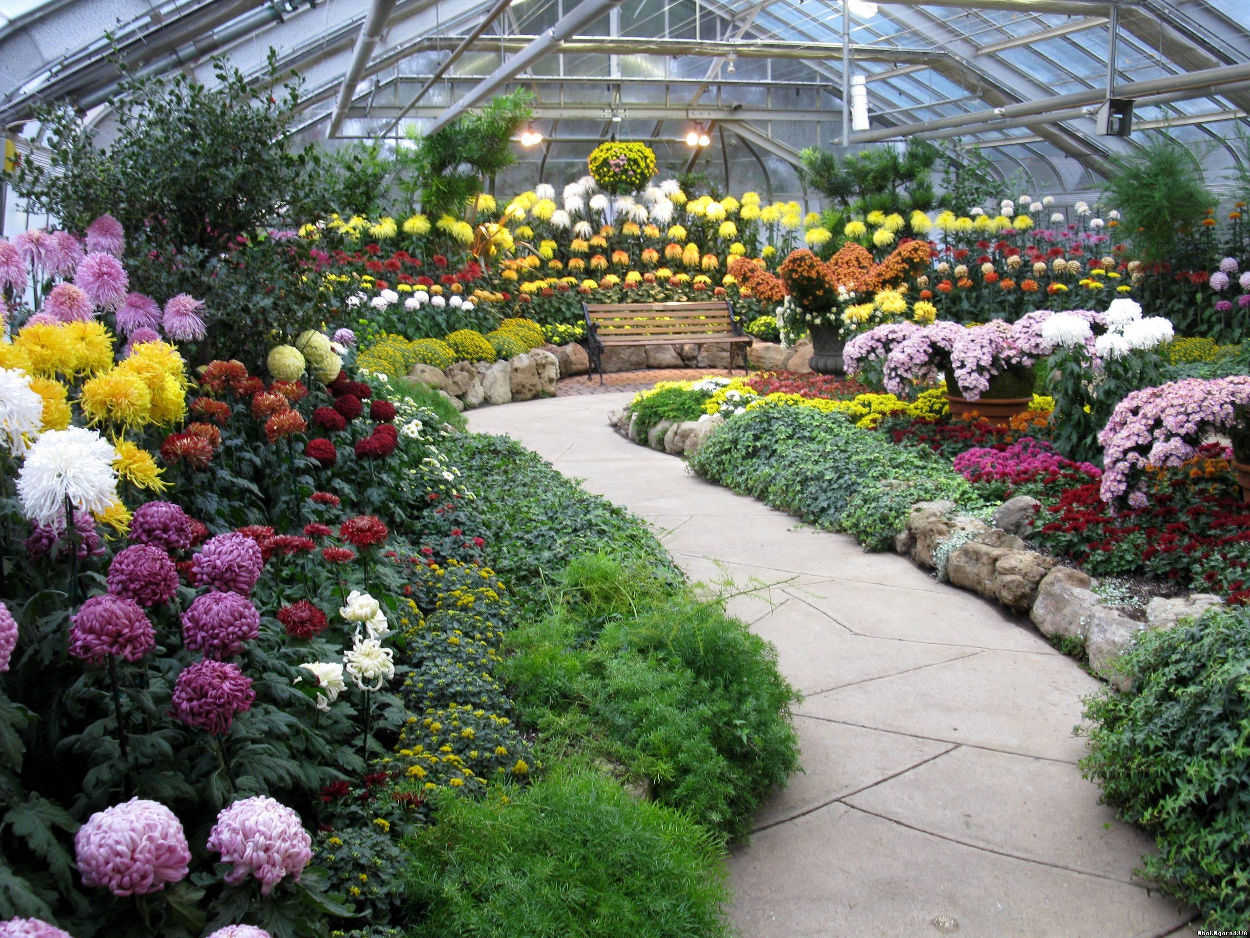 Фото оранжереи цветы